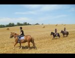 PONEY CLUB DU MOULIN 21500